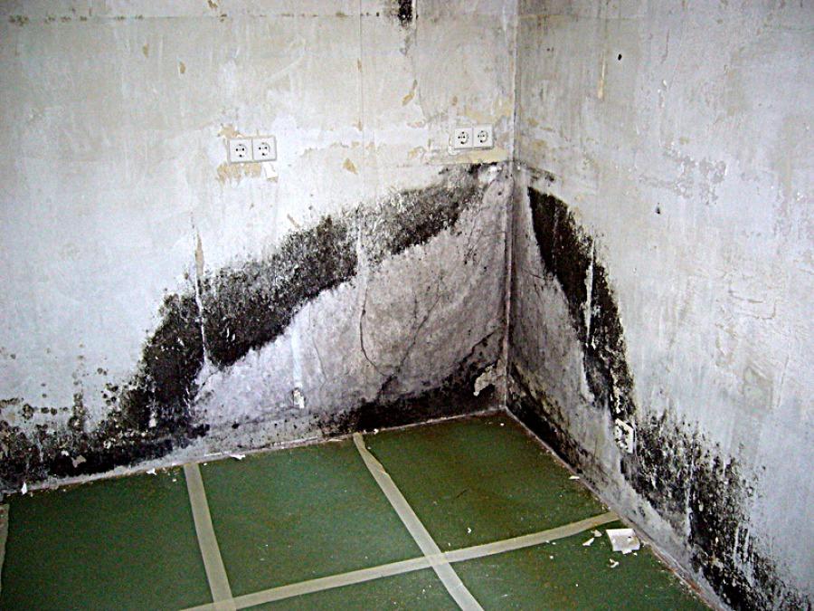 Schimmelbefall nasse Wände